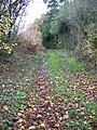 Footpath, Lambourn Woodlands - geograph.org.uk - 1652158.jpg