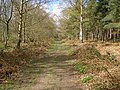 Footpath in Bourne Wood - geograph.org.uk - 760609.jpg
