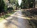 Footpath in Vinney Ridge Inclosure. - geograph.org.uk - 344044.jpg