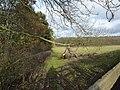 Footpath past Flatt Plantation, with dead tree - geograph.org.uk - 1588012.jpg