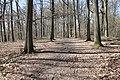 Forêt Départementale de Beauplan à Saint-Rémy-lès-Chevreuse le 14 mars 2018 - 09.jpg