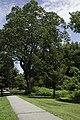 Forest Park, Springfield, Massachusetts - panoramio (3).jpg