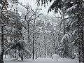 Foret des Cèdres Parc National de Theniet el Had (El-Meddad) 17.JPG