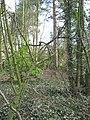 Former footpath through woodland - geograph.org.uk - 1773749.jpg