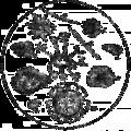 Fossils in Wealden flint - OAW (transparent).png