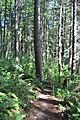 Four Springs Lake Preserve 13.jpg