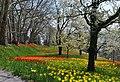 Frühlingsallee Tulpenblüte 2010 (2).jpg