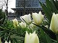 Frankfurt flower.JPG