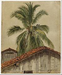 Palm Trees and Housetops, Ecuador