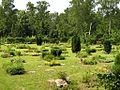 Friedhof Ruhleben.jpg