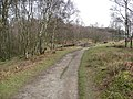 Froggatt Edge - Footpath - geograph.org.uk - 752747.jpg