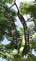 Fruit I IMG 8692.jpg