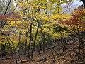 Fujiwaracho Sakamoto, Inabe, Mie Prefecture 511-0518, Japan - panoramio (1).jpg