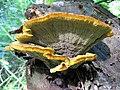 Fungus-IMG 3407.JPG