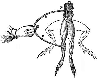 Luigi Galvani - Electrodes touch a frog, and the legs twitch into the upward position