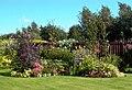 Garden of 56 Castle Heather Crescent - geograph.org.uk - 386596.jpg