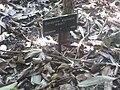 Gardenology.org-IMG 2031 hunt0903.jpg
