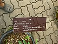 Gardenology.org-IMG 7706 qsbg11mar.jpg