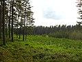 Garkalnes novads, Latvia - panoramio - SkyDreamerDB (3).jpg