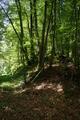 Gemuenden Ehringshausen Feldatal Deciduous forests Fagus sylvatica.png