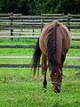 Gesenkter Kopf eines Pferdes.JPG