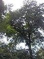 Giardino botanico di Brera (Milan 31.jpg