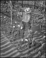 "Gila River Relocation Center, Rivers, Arizona. Watering chrysanthemum plants in ""Nakata and Son"" ho . . . - NARA - 538644.tif"