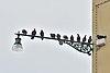 Giudecca Rio di Sant Eufemia piccioni 2 Venezia.jpg