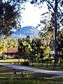 Glenugie Peak with kangaroos.jpg