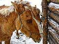 Gorkhi-Terelj National Park, Mongolia (149197264).jpg