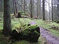 Gortin Glens Forest Park (20) - geograph.org.uk - 1712684.jpg