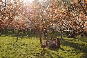 Herăstrău Park - Image: Gradina Japoneza, Herastrau 03