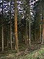 Graig Tynygarreg forest - geograph.org.uk - 721121.jpg