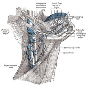 Jugulodigastric lymph node - Lymphatics of the tongue. (Jugulodigastric lymph node visible but not labeled.)