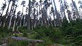 Grayback Mountain (15637086179).jpg