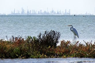 Nueces Bay - A great egret wades on the waters of Nueces Bay, with industry on the horizon.