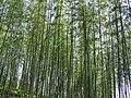 Green bamboo.jpg
