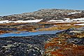 Greenland-Tundra near Ilulissat - panoramio.jpg
