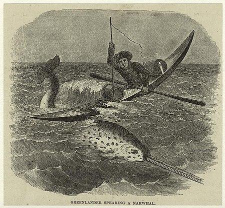 Охота гренландца на нарвала. Рис. XIX в. Нью-Йоркская публичная библиотека.
