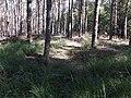 Hügelgäber Arnsnesta.jpg