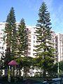 HK Choi Sai Woo Park Pacific Palisades Trees Sino Group.JPG
