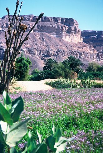 Hadhramaut - Region close to Seiyun in the Hadhramaut Valley