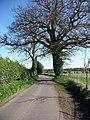 Hambledon Lane - geograph.org.uk - 1273917.jpg