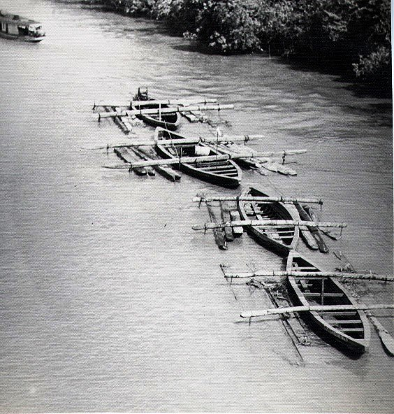 Hardwood logs transported down Suriname river