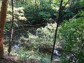 Heidesee Blauer See (1).jpg
