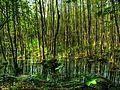 Herrensee Auenwald WikiLovesEarth 1105070037 8 9 DE1.jpg