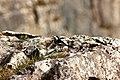 Hiding In The Rocks (259048859).jpeg