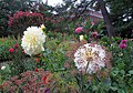 Hillwood Gardens in July (19179415024).jpg