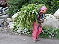 Himachali woman carrying fodder.jpg
