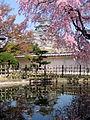 Himeji-jō sakura3.jpg